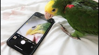 ميزو يتعلم استخدام الحمام والتلفون ينطي لايكات وياخذ صور سبحان الله🙈❤️