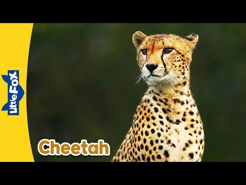 Meet The Animals 4: Cheetah  Level 2  By Little Fox