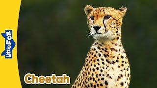 Meet the Animals 4: Cheetah | Level 2 | By Little Fox