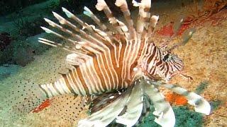 Scuba diving Seychelles 2015