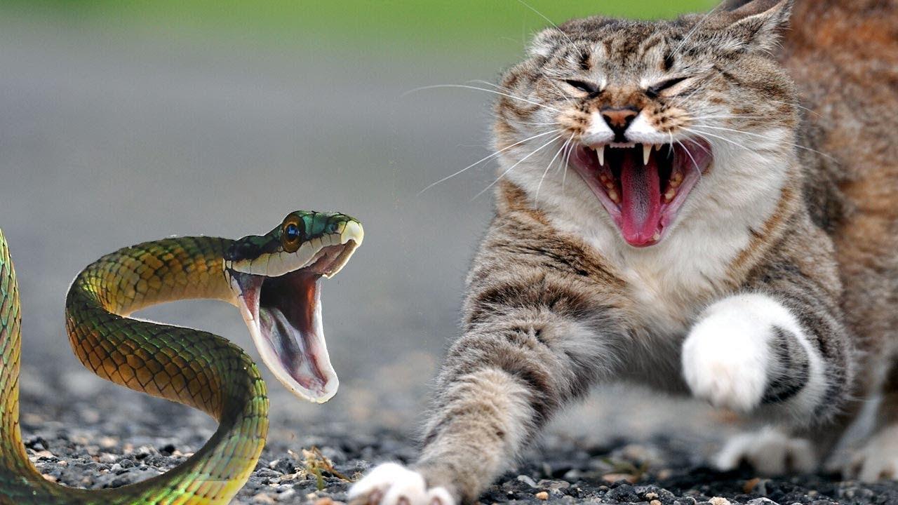 Best Cat Attacks
