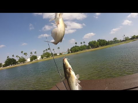 Great Day Of Fishing Out At Fireman's Park In Mcallen, Tx (Language)