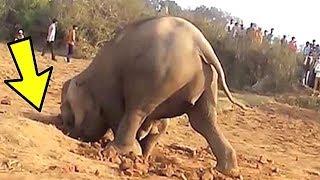 Эта Самка Слона Копала Яму 11 Часов, Вот Почему