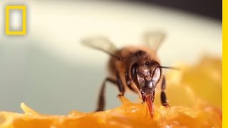Did You Know Humans Have Relied on Bees for 9,000 Years?