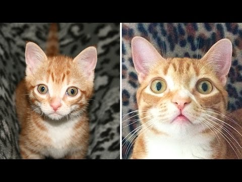 Kitten to Cat! – Cute Compilation