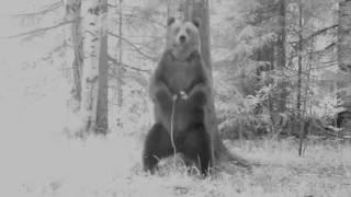 Медведь Ферапонт из Висимского заповедника показал свою подругу