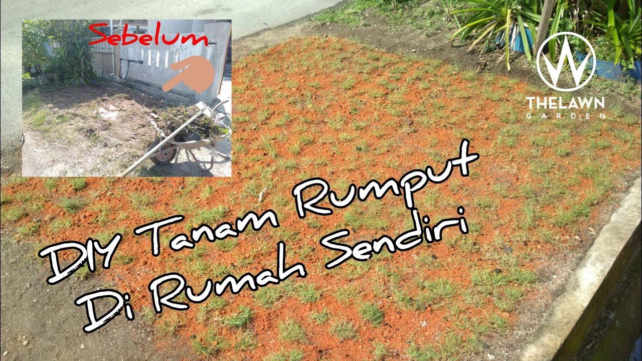 Cara Mudah Tanam Rumput Karpet Easy Way To Grow Grass Youtube