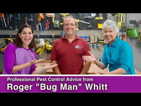 Can You DIY Your Pest Control Service??