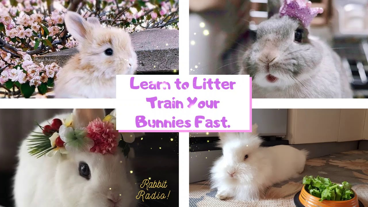 Tips on How to Potty Train a Rabbit and Bunny Fast & Easy 8   8 ...