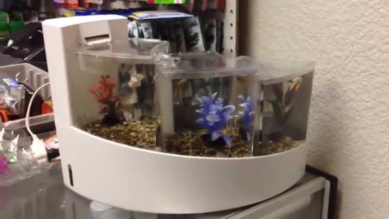 Betta waterfall tank youtube for Waterfall fish tank