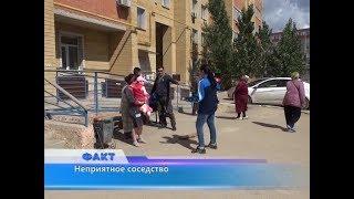 Неприятное соседство: один из многоэтажных домов в мкр Болашак захватили тараканы