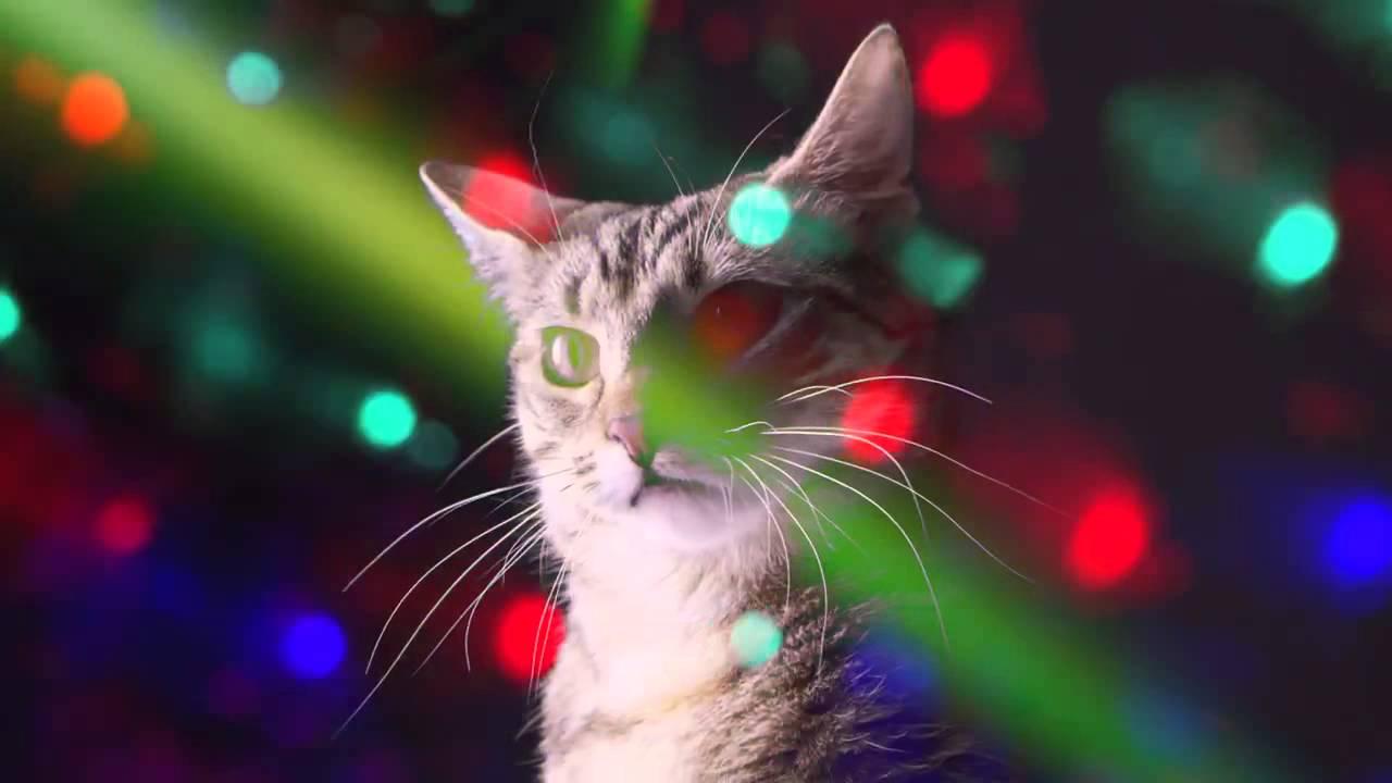 fiesta de gatitos miau miau!!! - YouTube