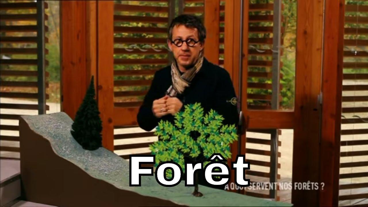 Quelles Sont Les Différents Types De Bois quelles sont les différentes essences d'arbres ? - c'est pas sorcier