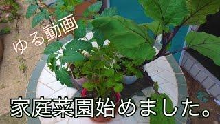 【休日ゆるVlog】家庭菜園始めました。