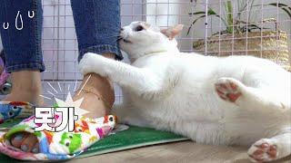 바지끄댕이 잡고 못 나가게 하는 고양이