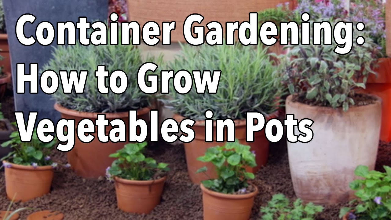 container gardening top tips for success youtube
