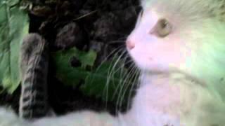 Гетерохромия . Разный цвет глаз . heterochromia .