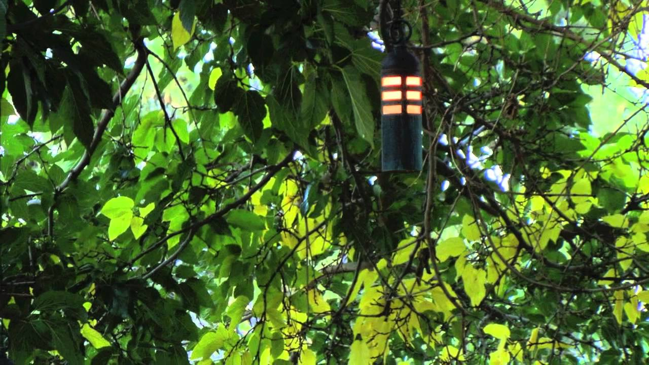 Hanging Tree Landscape Lighting Fixtures YouTube