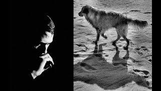 7. A tu lado (Javier Busto)