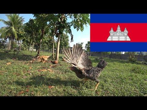 Tani hostel i świeży drób - Kambodża 2018 #2