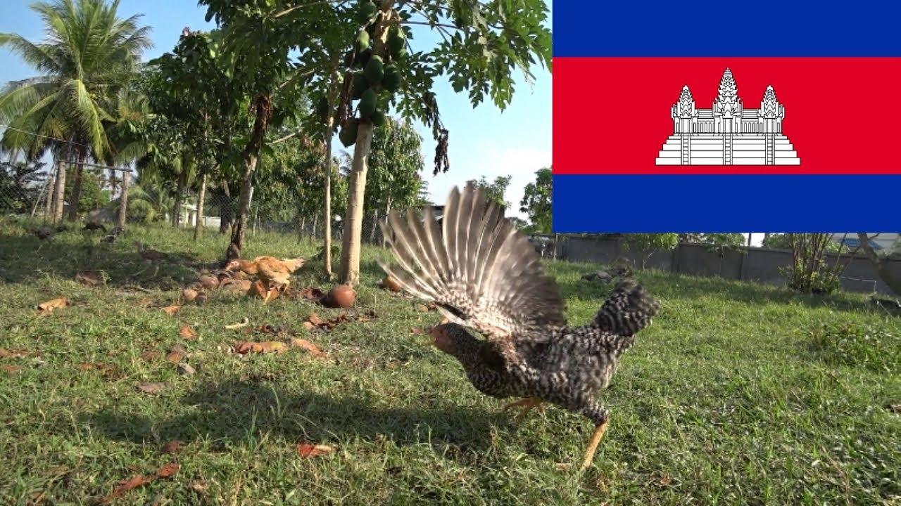 Tani hostel i świeży drób – Kambodża 2018 #2