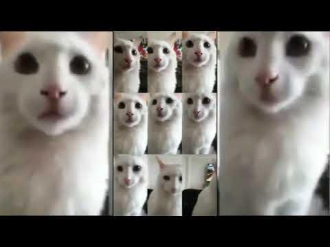Tik Tok - Mr. Sandman Cats compilation #6