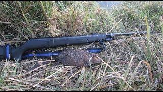 Одиночная охота на ондатру с ружьем видео