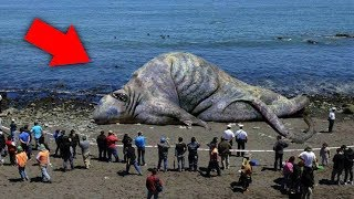 10 Unknown Creatures Caught on Tape