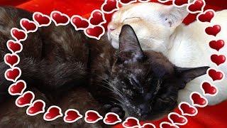 Котята бегают в животе у кошки Микки 🐱 Kittens move in the belly of a cat 🐱  кошка за день до родов