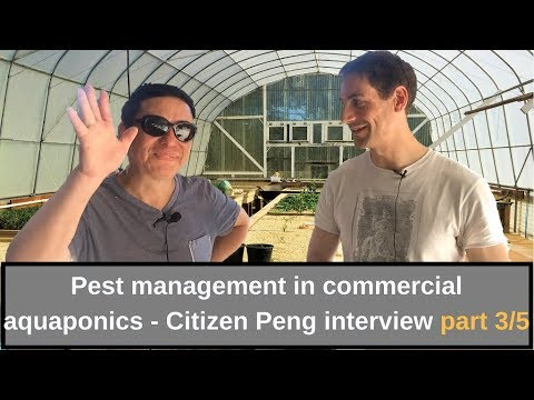 Pest management in commercial aquaponics   Interview Citizen Peng part 3