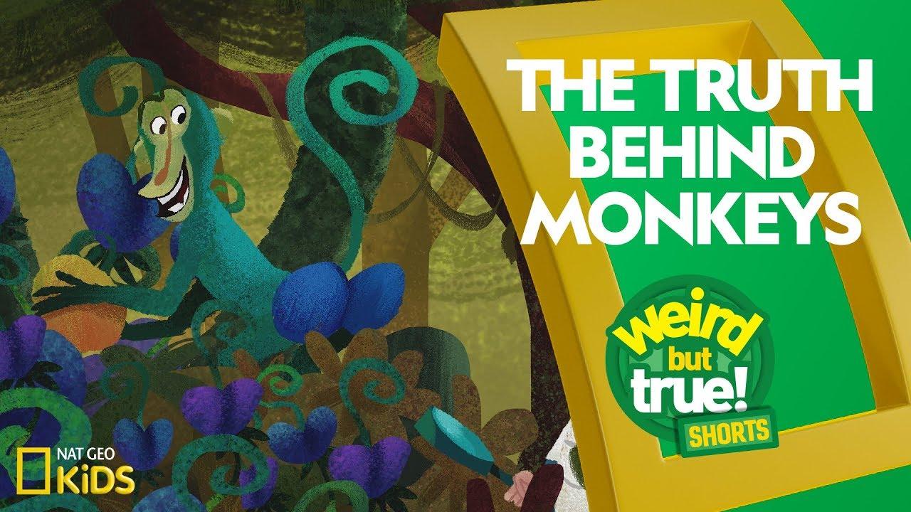The Truth Behind Monkeys | Weird But True! Shorts