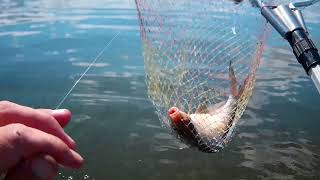 Рыбалка Лещ на кольцо Волга Победилово