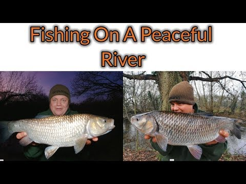 Fishing For Chub On A Peaceful Small River (Video 158)