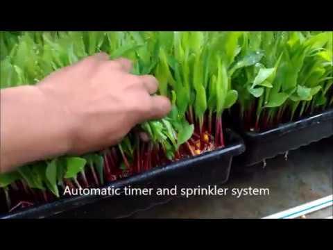 Hydroponic Green Fodder Machine - Impact Technologies, Yelahanka New Town, Bangalore