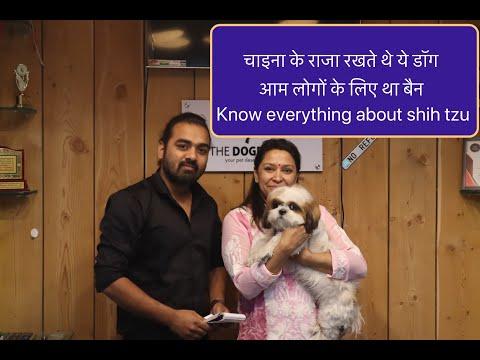 जानिए Shih tzu डॉग ब्रीड के बारे मैं | Shih tzu Facts | Know From Dog Parent