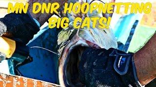 minnesota river flathead catfishing hoop net with the mn dnr