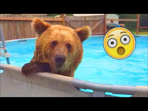 Funniest Animals 2021 😻 Funny Animal Fails Compilation - Cutest Animals Ever