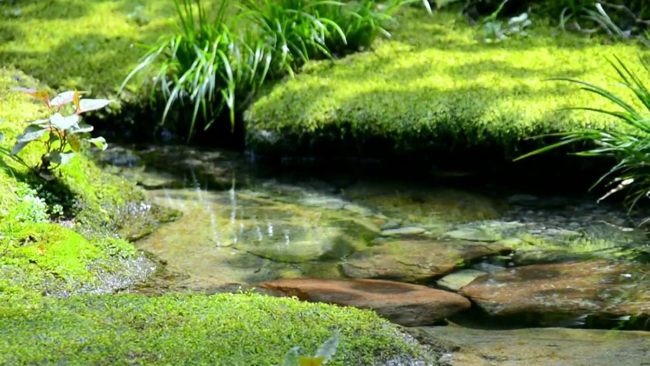 【自然の音】小さな泉 / Nature Sounds - A Small Spring