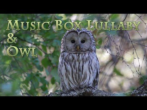 Mother Owl & Peaceful Music Box Lullaby - Mère Hibou  &  Berceuse Paisible d'une Boîte à Musique