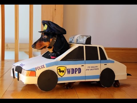 funny-dog-costumes-cops-robbers-chase