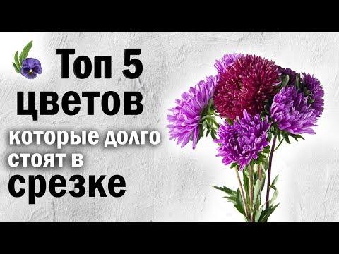 Вопрос: Какие полевые цветы дольше всего сохраняются после срезания?