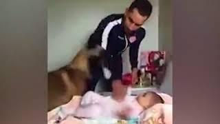 Bebeği Babası Gibi Koruyan K9 ( Alman Kurdu ) Köpeği