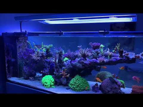 Giesemann Aurora V8 ECO Hybrid - Meerwasseraquarium Beleuchtung T5/LED Aquariumbeleuchtung Lampe