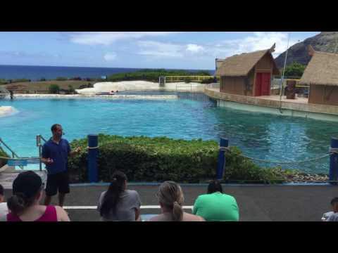 Sea Life Park Hawaii Dolphin & Wolphin Show