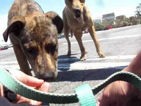 Rescuing dogs (a mom & her daughter) - Part 1 out of 2 (by Eldad Hagar)