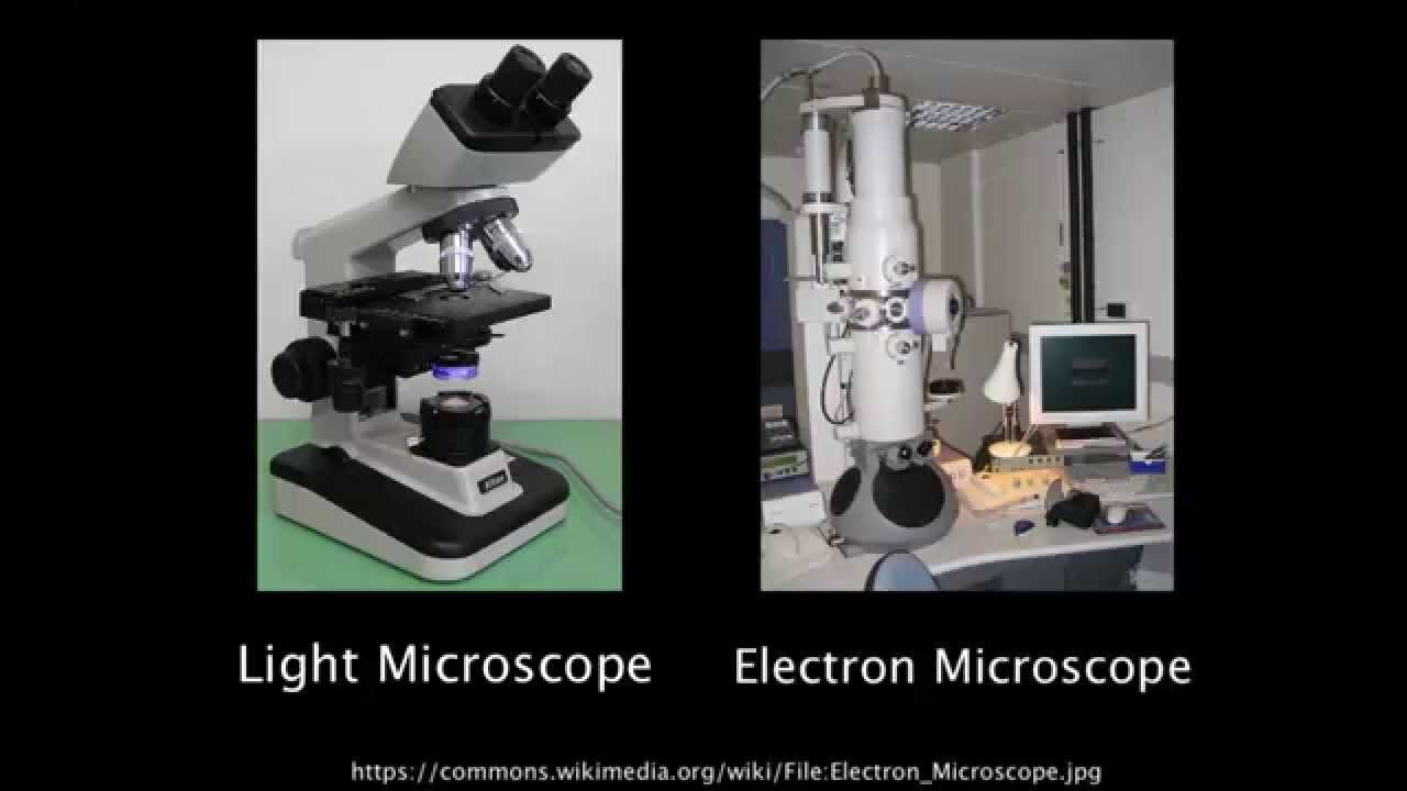 light and electron microscopes essay Free essay: electron microscope the electron microscope has become one of the most widely utilized instruments for materials characterization an electron.