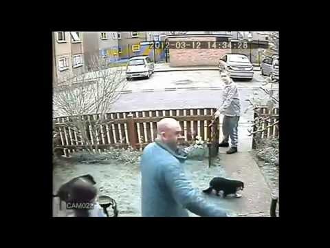 CCTV - Pit Bull kills cat in its yard while scum owner watches: (