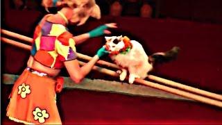 Circus. The show cats. Цирк. Смотреть Шоу кошек.