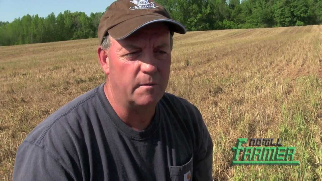cover crops build soils in the field moore farm at mount ulla