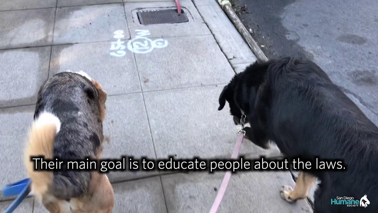 Humane Law Enforcement | San Diego Humane Society